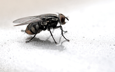 Fly Pest Control Services London