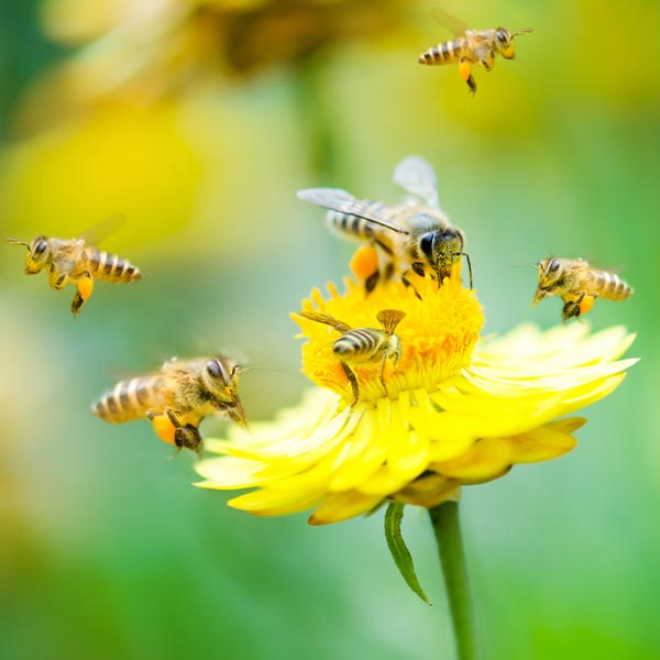 London Bee Removal Specialists