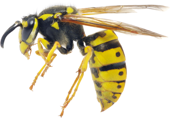 Wasp Nest Removal London